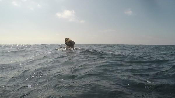 Diving Sayulita - El Morro