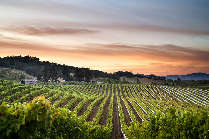 Alexander Valley Vineyard Sunrise - 2048px--X3.jpg