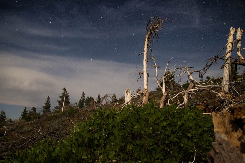 Dead trees at night