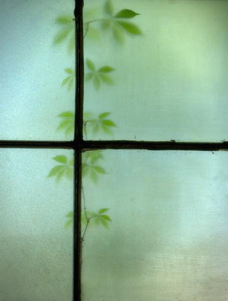 2012-03-25 leaves behind windows denman ave DSC0033.jpg