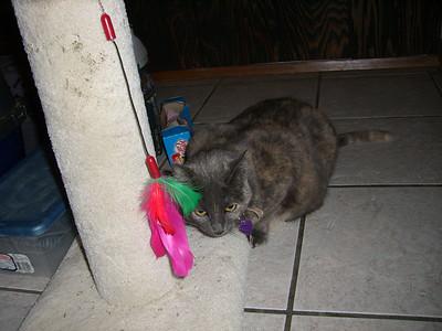 Catsitting Alicia Kenny's cat Baby