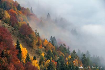 Kamniški vrh - Nov 1, 2011