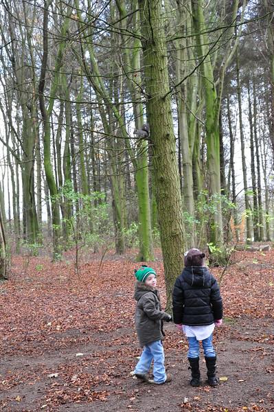 Children watching grey squirrel Hardwick Park - Richard Cowen.JPG