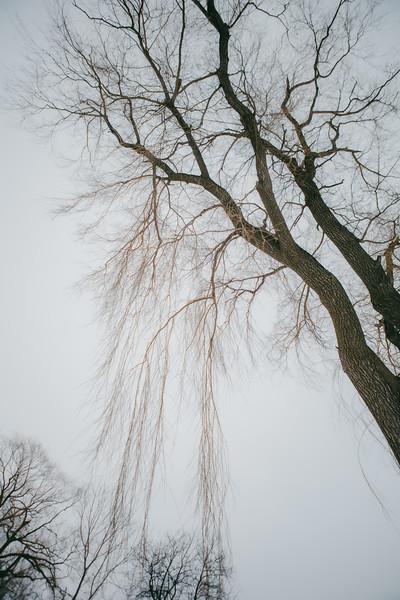 AVS_EcoPreserve_Winter2021-10.jpg