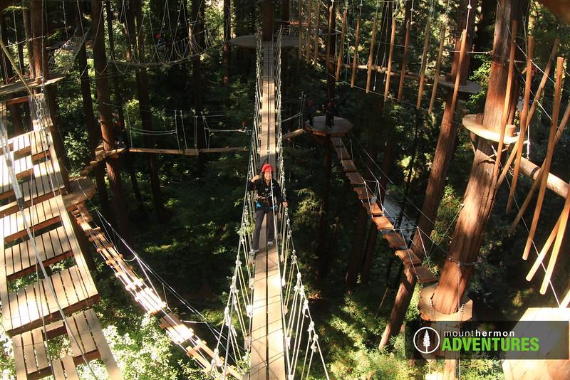 sequoiaportrait_1475697864284.jpg
