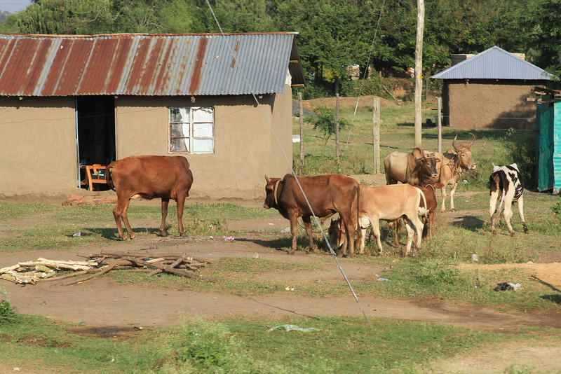 Kenya Part1 '15 2519.JPG