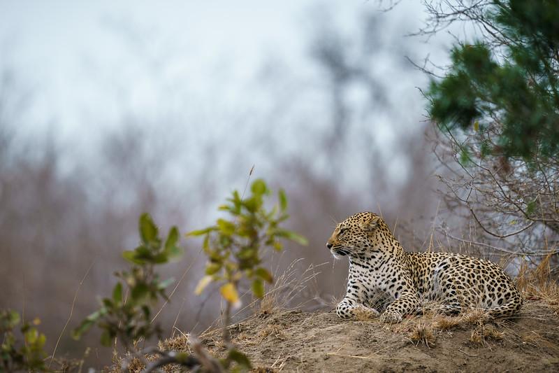 LeopardHills-20180929-0166.jpg