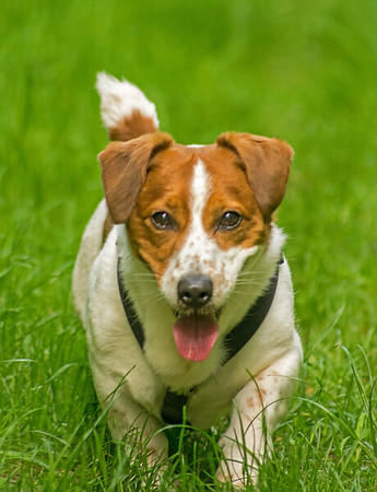 TUNMAN WOODS DOG WALK (3)