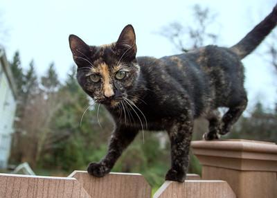 Cali  the Cat  12-30-15