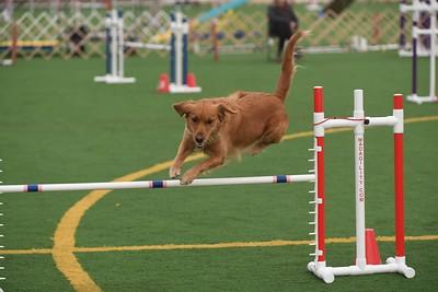 Dauphin Dog Training Club AKC Agility Trial April 13-15