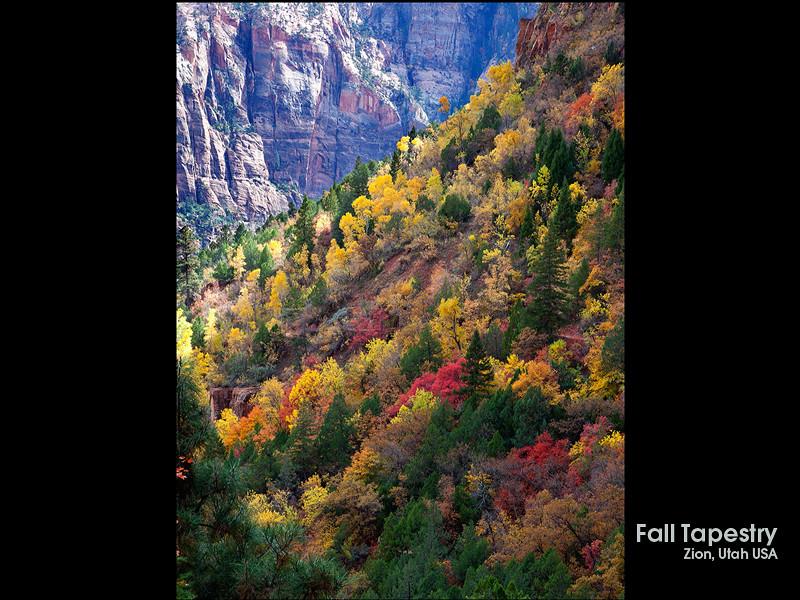 Fall Tapestry.jpg