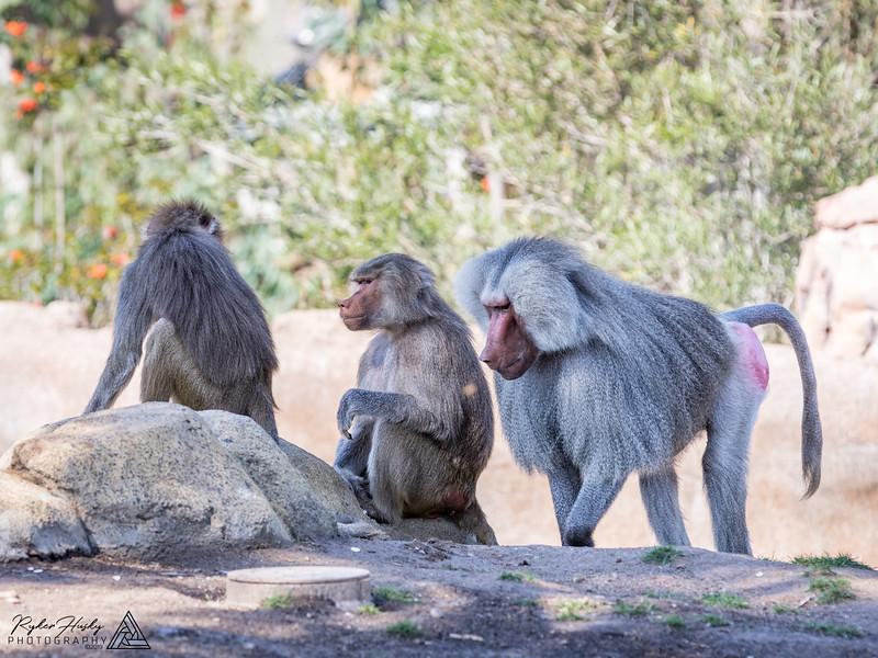 San Diego Zoo and Safari Park-098.jpg