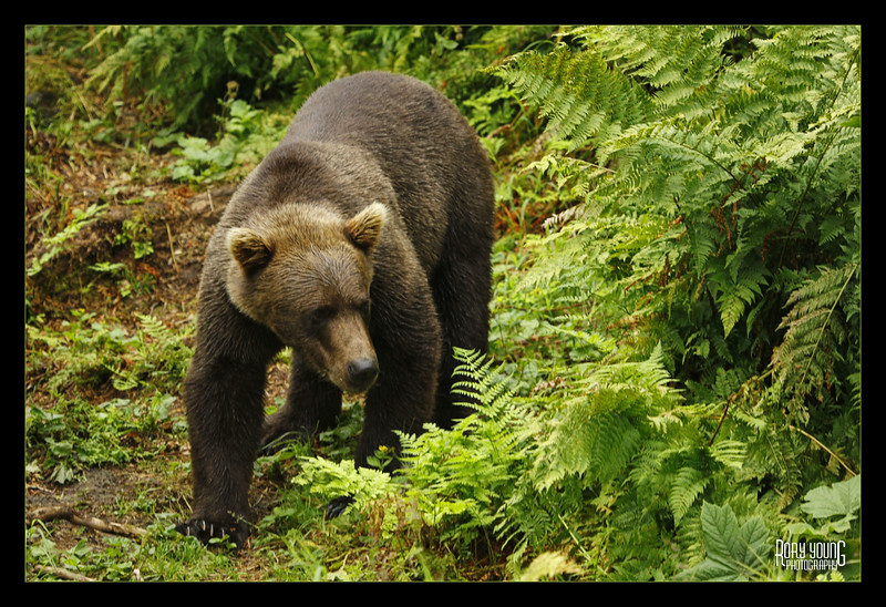 BearWalk.jpg