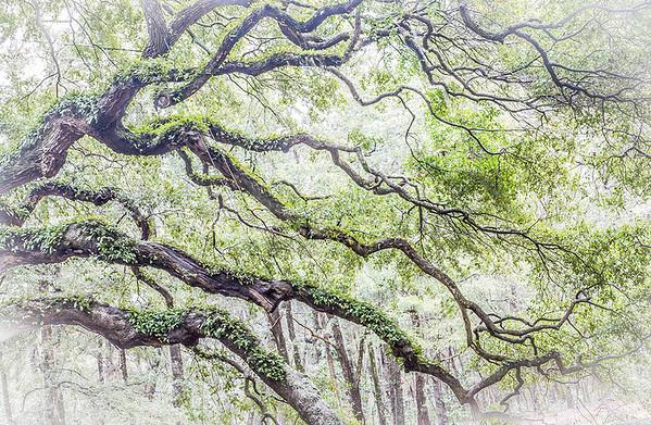Expressive Trees