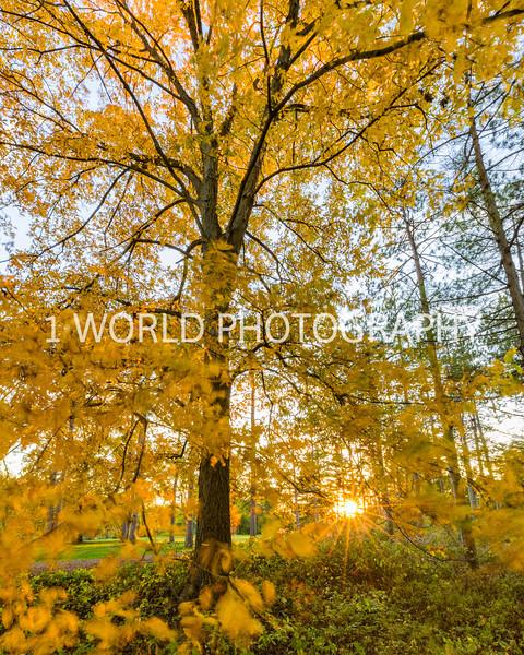 Morton Arboretum Fall 2017-77-2-6.jpg