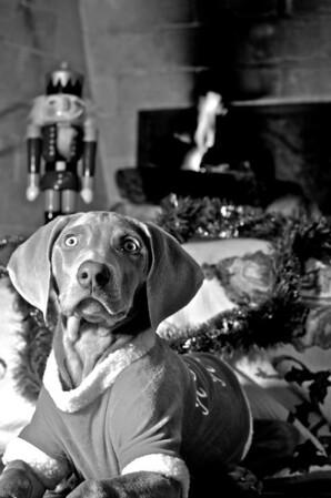 Hunter's 1st Christmas
