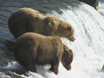 Bob's Bear Trip