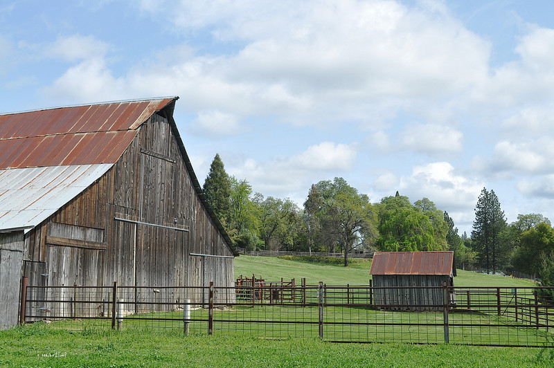 barn and shed 2 4-7-2013.jpg