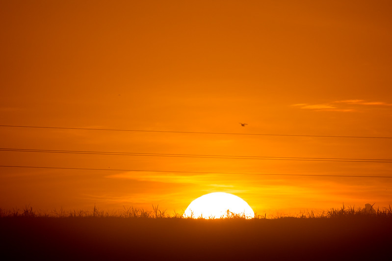 The sun starts to rise Lake Okeechobee as seen from a sugar cane field in South Bay, Florida on Thursday, June 23, 2016.  (Joseph Forzano / The Palm Beach Post)