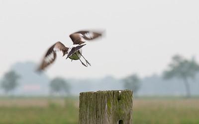 vogels De Wilck