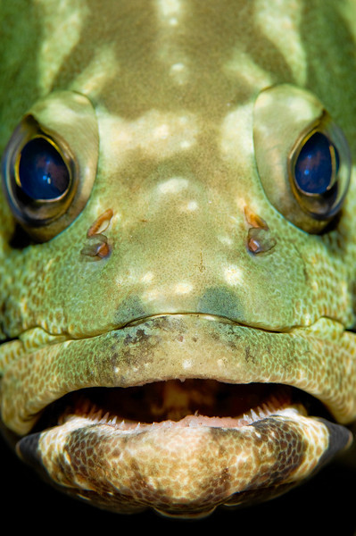 A grouper face shot