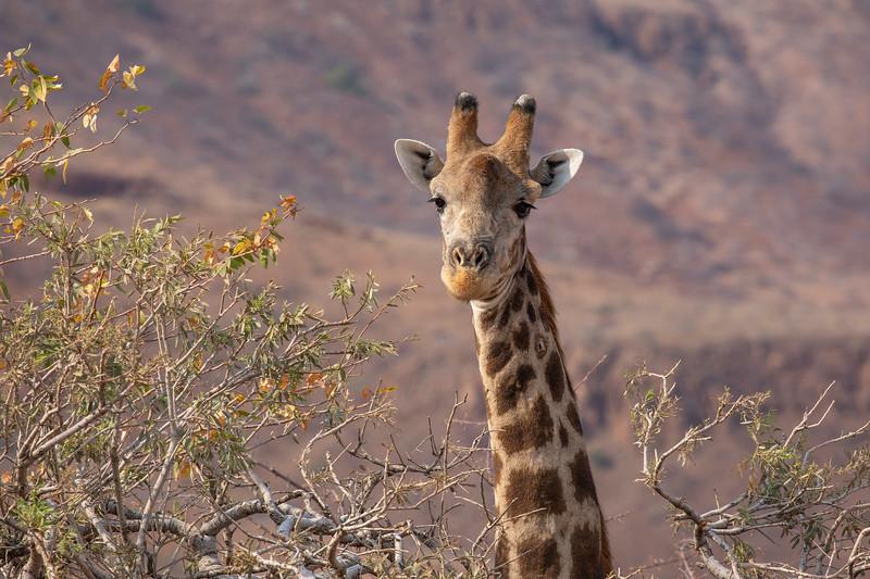 Namibia 69A6844.jpg