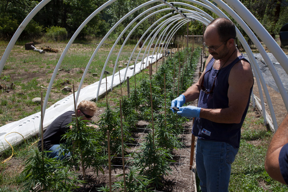 ". Mike Boutin and Taylor tend to the garden  in ""Weed Country\"" on Discovery Channel."