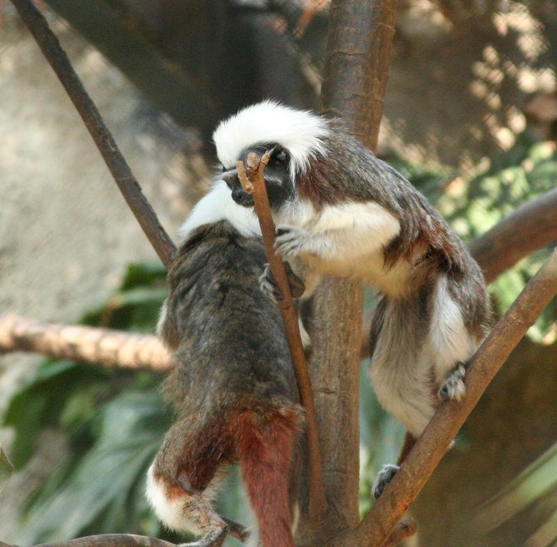more monkey play.jpg