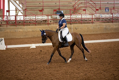 Horse 197