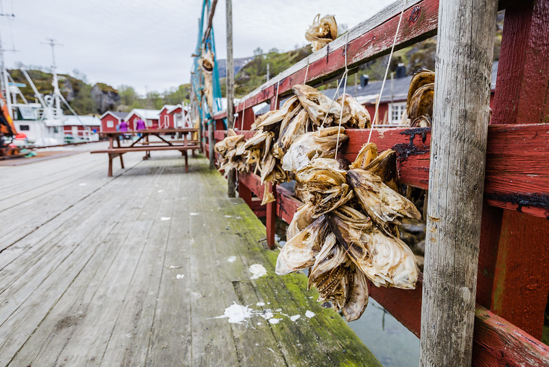 Fish heads on a dock in the Lofoten Islands of Norway.