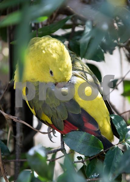 birds 16.jpg