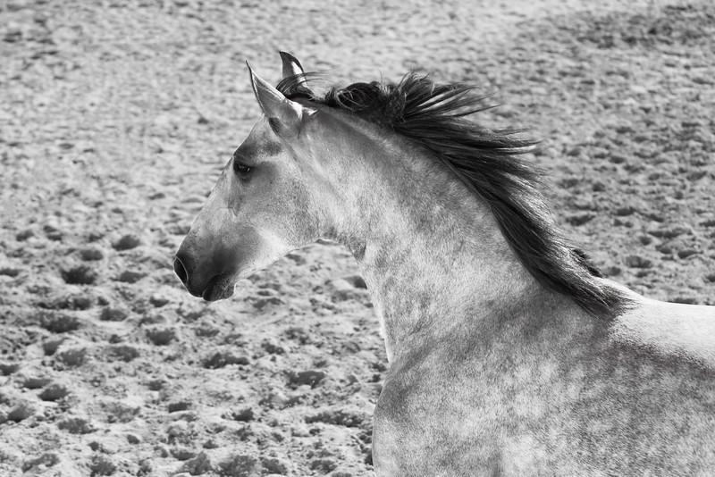 Escola de Equitação de Alcainça