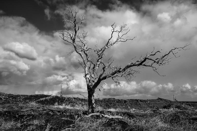 20170125-the-lone-tree-201359901.jpg