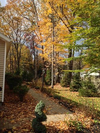 Fall - 2013