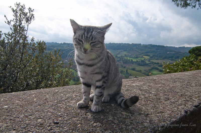 Cat in Orvieto (c)Runaway Juno