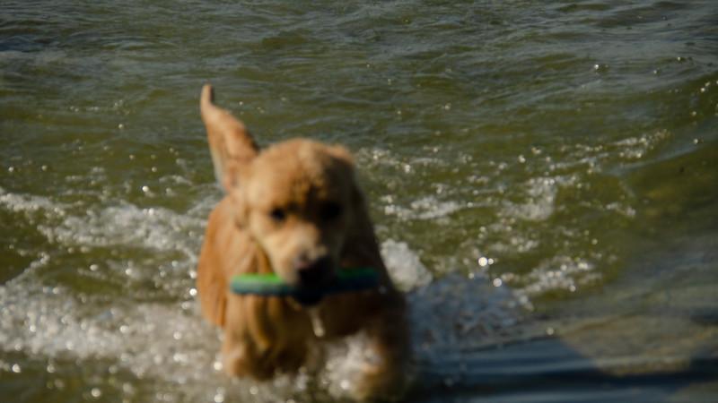 PuppyParty18-639.jpg