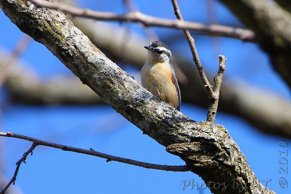 2010-03-17 Busch Wildlife CA