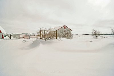 Snow on the grape vines and the grainry in winter.