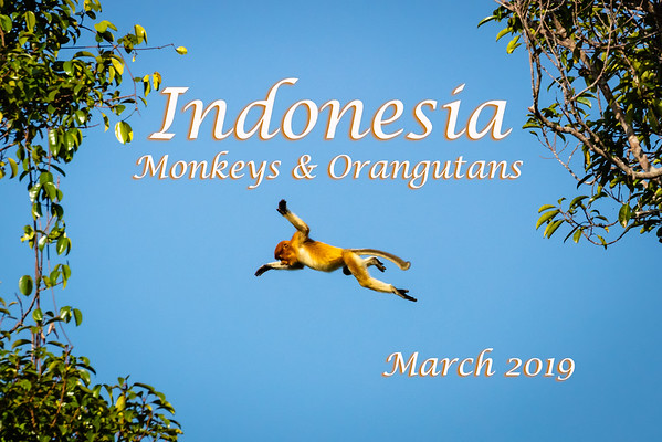 Indonesia - Monkeys & Orangutans