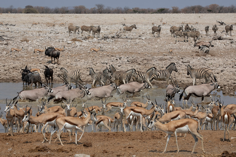 Namibia 69A8045.jpg