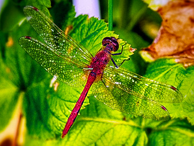 Dragonfly July 2014