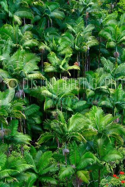 Palm Forest_batch_batch.jpg