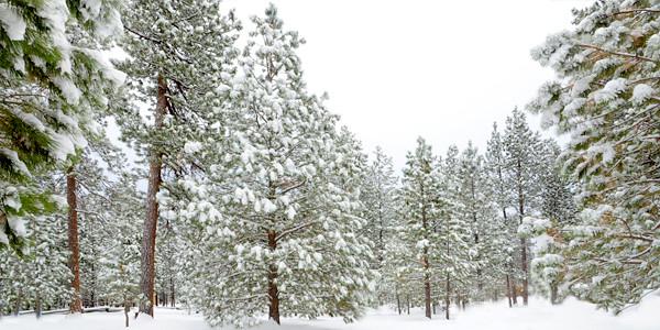 big-snow_KTK4713.jpg