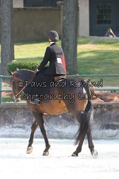 Class 100 Ladies Hunter Under Saddle