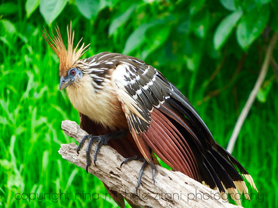 Amazon Lowlands