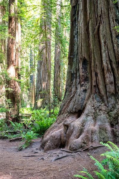 Jedediah Smith Redwoods, Crescent City