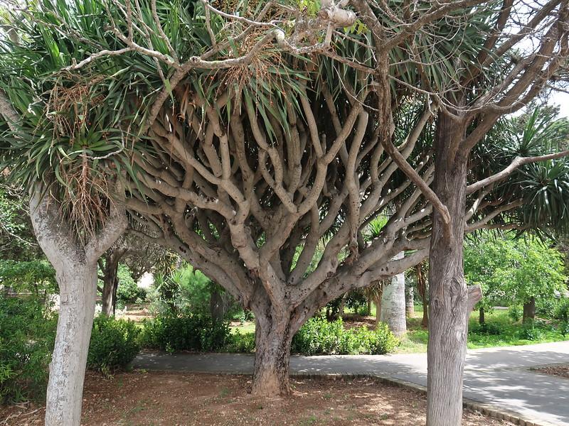IMG_7452-tree.JPG