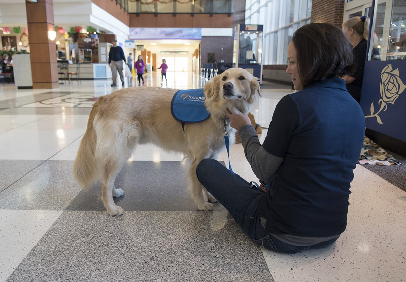 Therapy Dogs-Holiday Stress