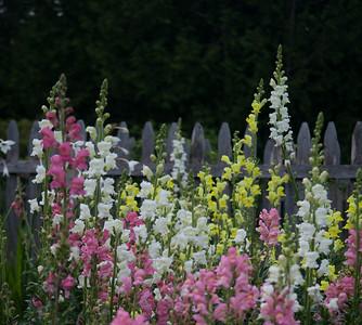 Arcady's Garden