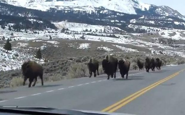 """. <p>3. (tie) EARTHQUAKES <p>We won�t be worried until buffaloes start fleeing Yellowstone. ... WHAT? ... They ARE fleeing Yellowstone? (unranked) <p><b><a href=\'http://www.infowars.com/animals-fleeing-from-yellowstone-supervolcano/\' target=\""""_blank\""""> HUH?</a></b> <p>   (Photo from YouTube)"""